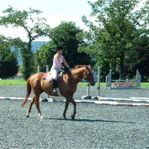 Horse_Turf_1